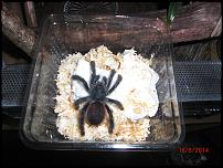 groups/avicularia-fanclub-picture48605-cimg6089.jpg
