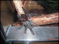 groups/avicularia-fanclub-picture48606-cimg6094.jpg