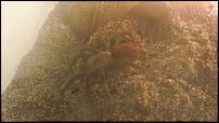groups/brachypelma-ig-picture37765-dscf2441.jpg